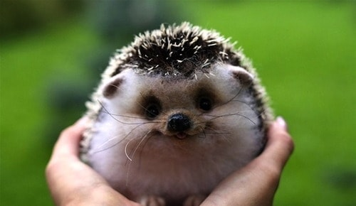 cute-smiling-animal-in-hands